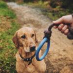 Beco – Hoop on a rope